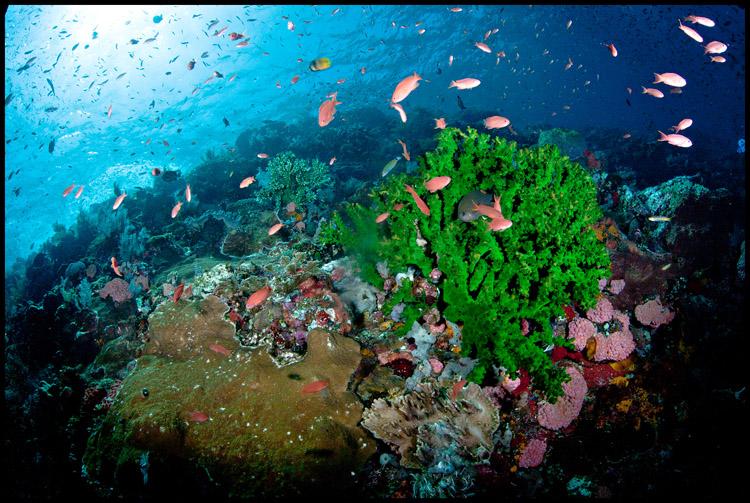 Tatawa Besar Reefscape 2