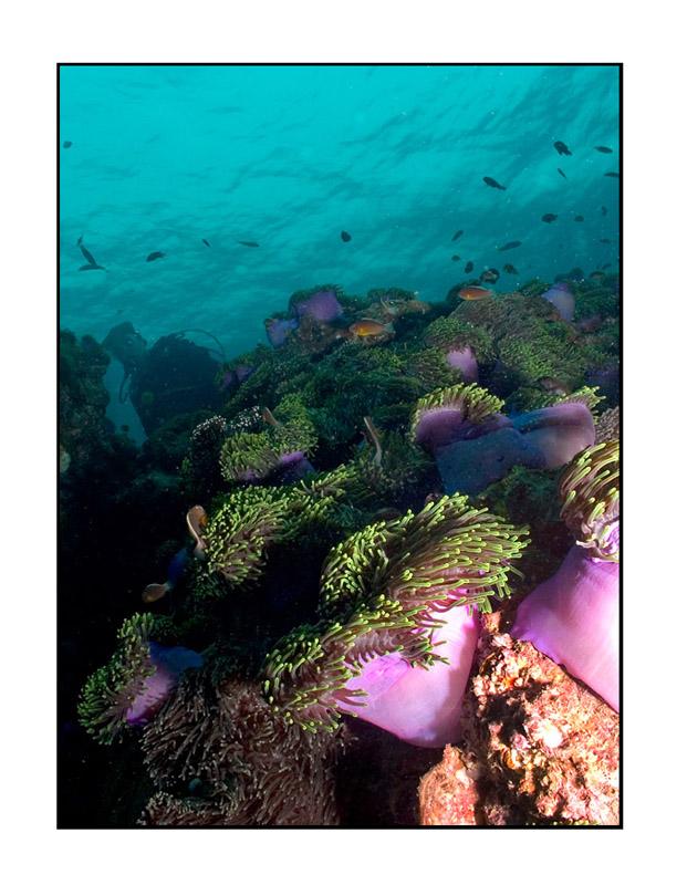 Anemone reef