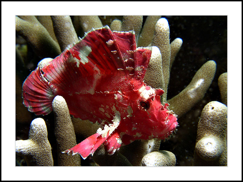 Sitting on a coral
