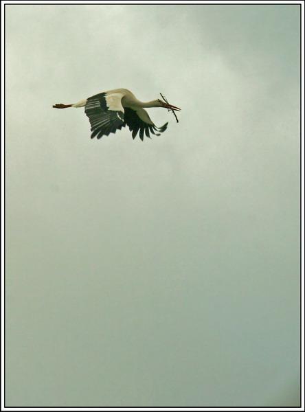 Hacia el nido.jpg