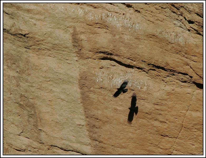 Cuervos 1.jpg
