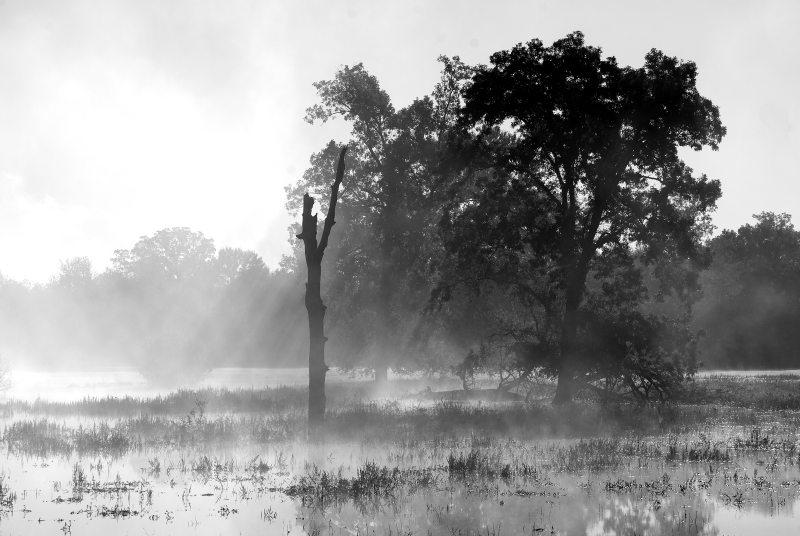 Fog Shot, Highway 135, 10-24-2009