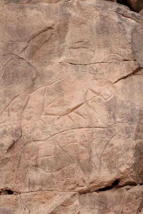 Buffalo petroglyph, Wadi Matkhandoush.