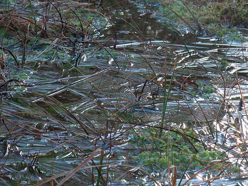 Iced pond