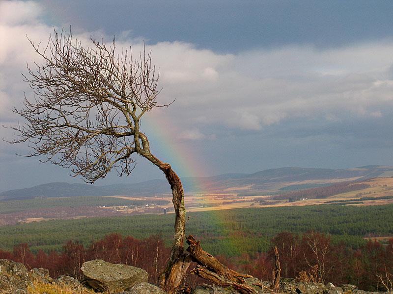11th February Lone Tree and Rainbow