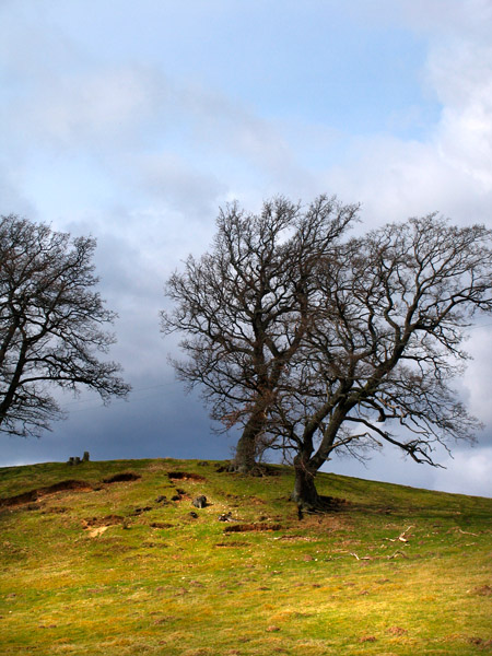 20th April Trees