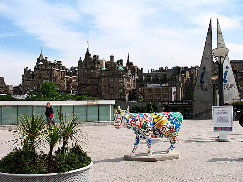 Edinburgh cow
