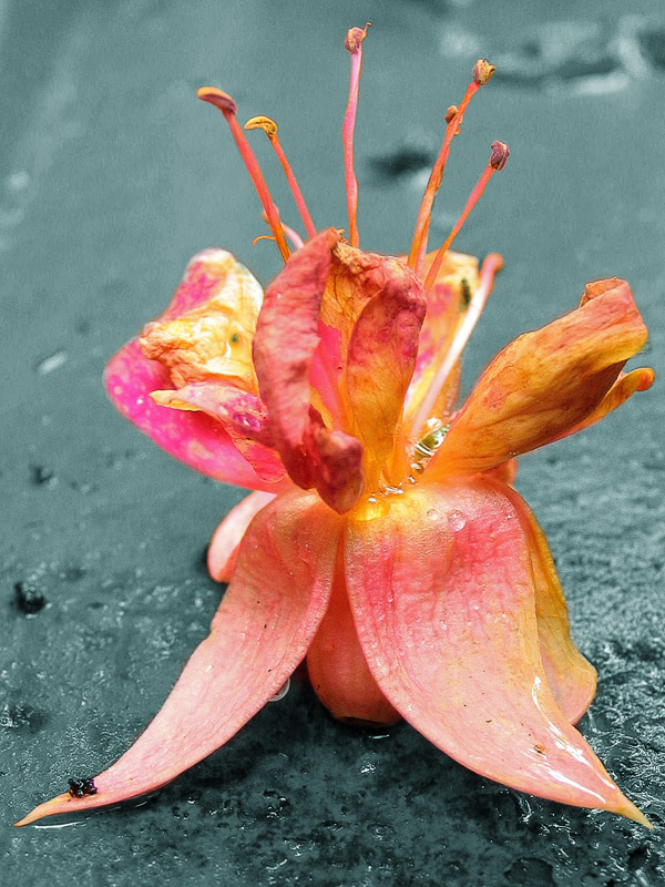 21st August Fallen Flower