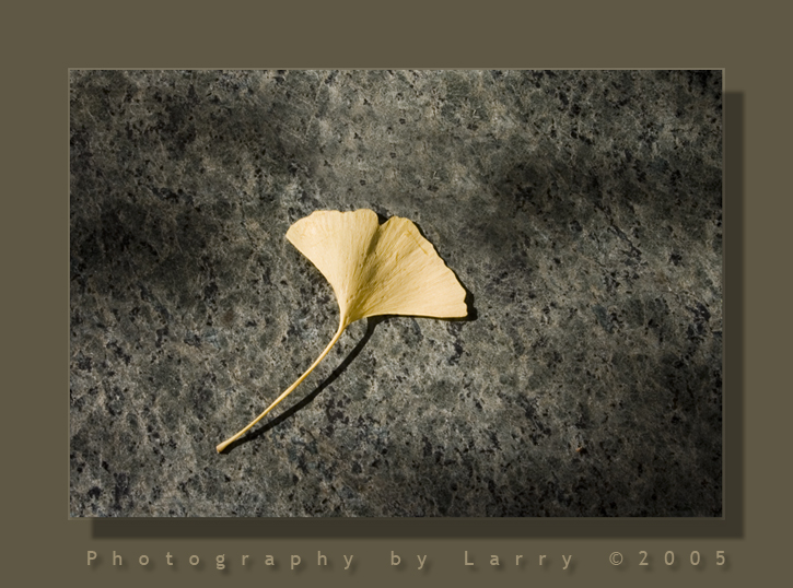 Ginko Leaf .jpg
