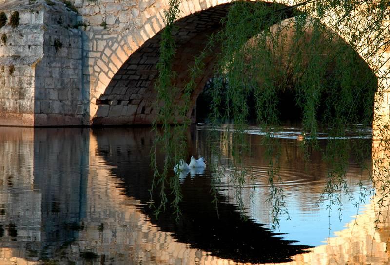 Ducks - Puentedura