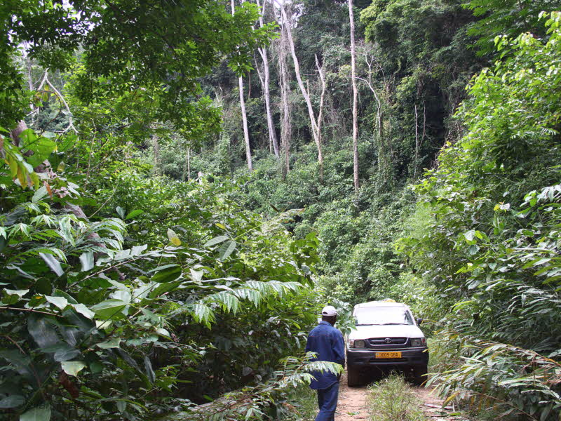 The road from Lope to the Ogoué River crossing, Gabon