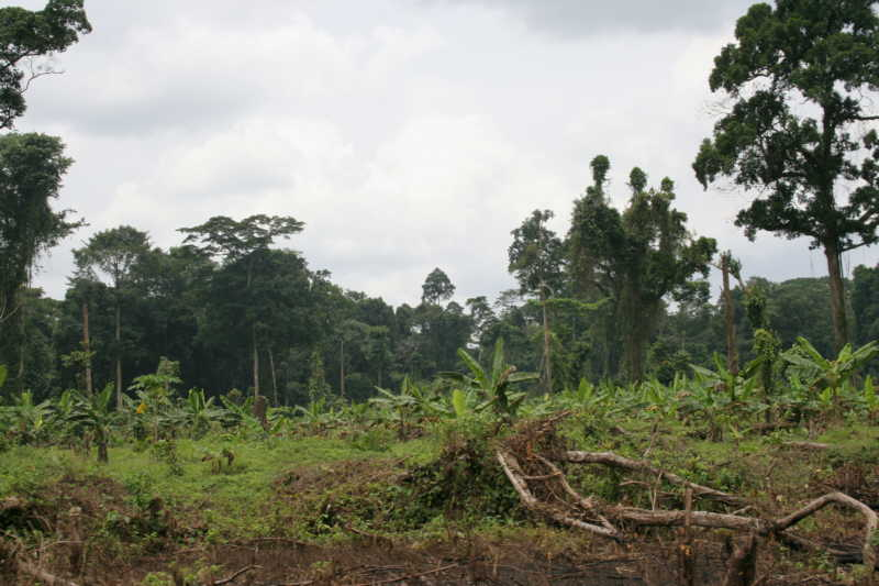 Farm bush