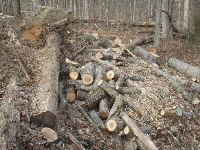 Free Wood3.jpg
