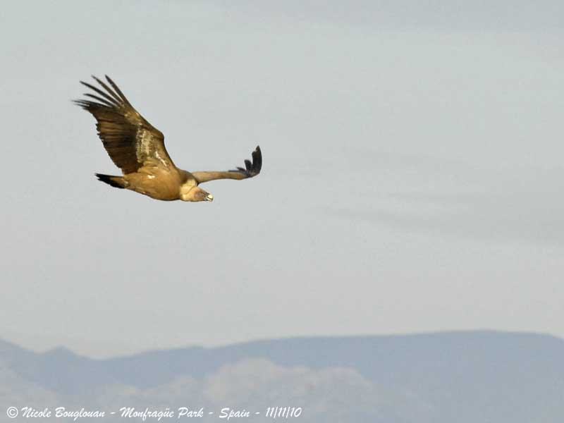 E G Vulture flight