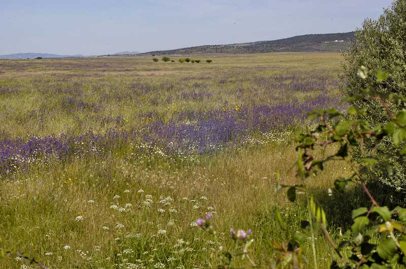 MEADOWS and PLAINS