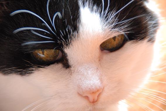portrait Ragna in sunlight.jpg