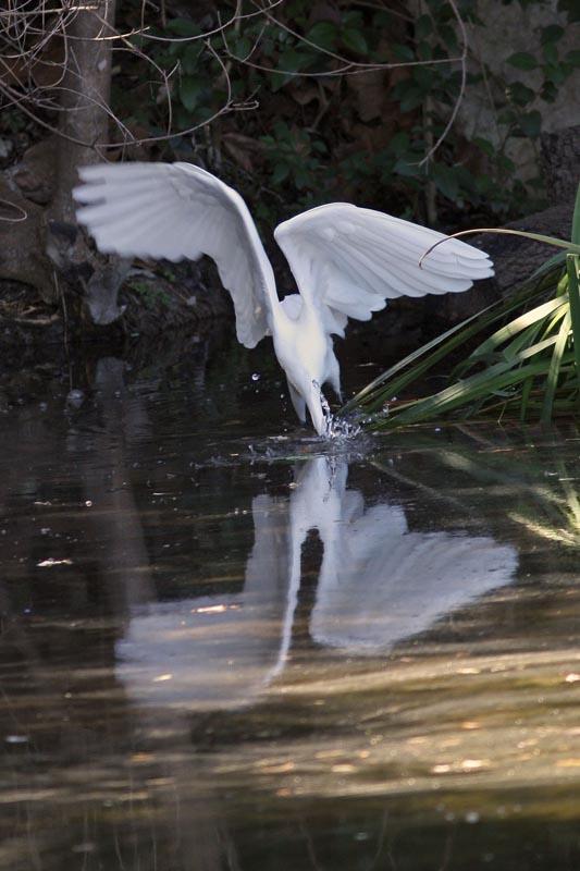 Egret-2941