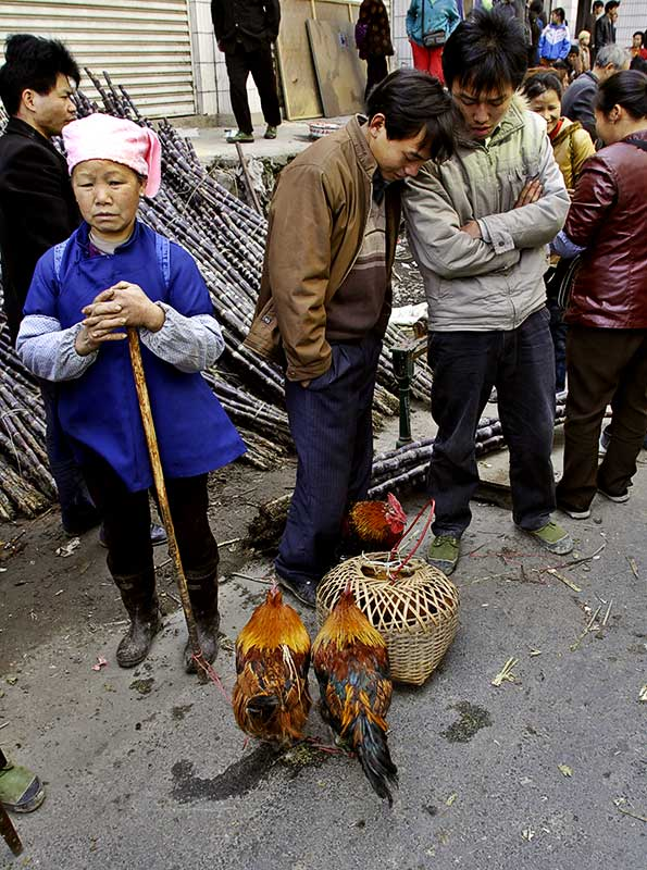 Selling roosters, Guizhou Province, China