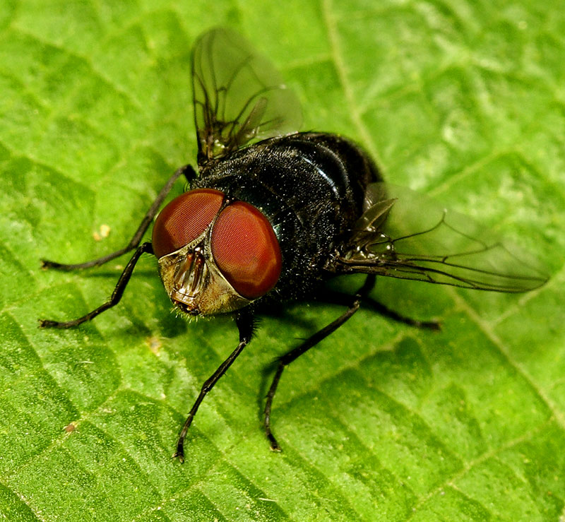 Fly eyes. Order: Diptera. Wuling Mts. Hunan Province, China
