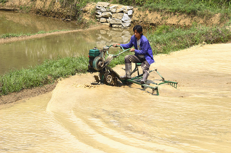 Final preparation of a rice field before planting.