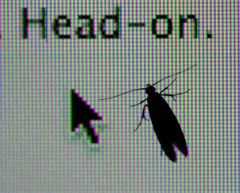 While looking at some insects I just posted on pbase, this moth landed on my screen.