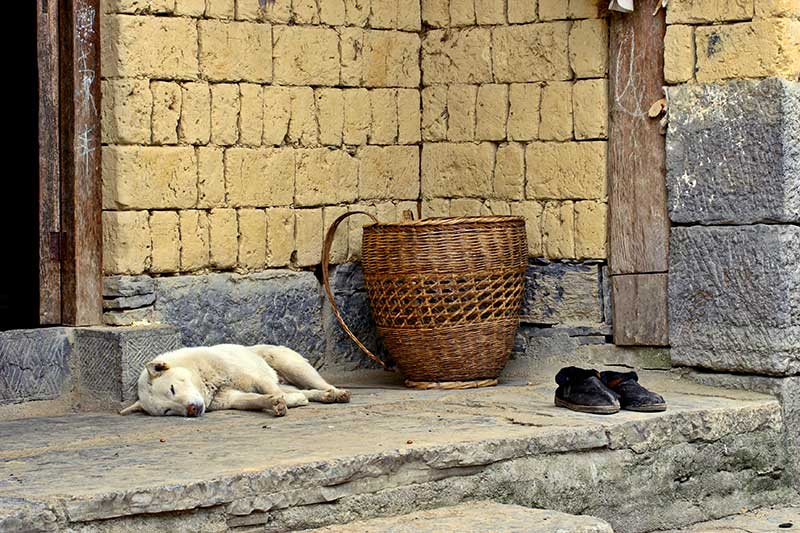 A dog, a basket and two shoes.