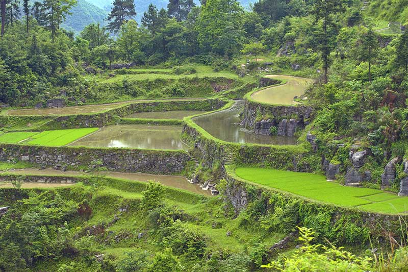 Mountain rice fields.