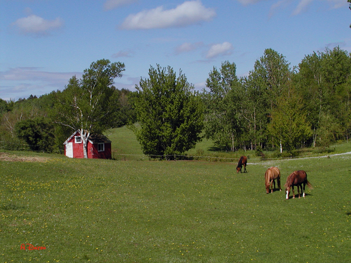 Rockland Horses ~ Annapolis Valley, N.S.