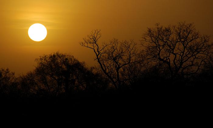 Niokolo Sunset III