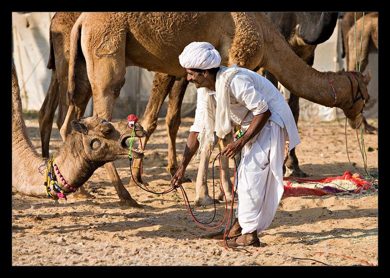 Man Camel 08