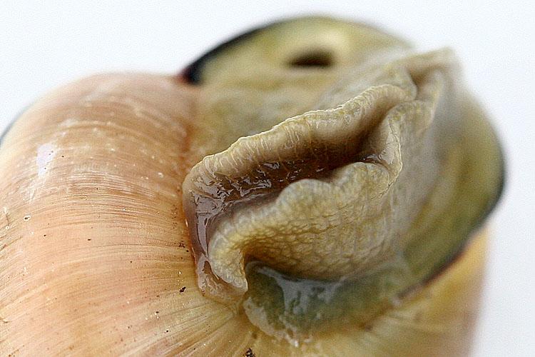 Its a snail<br>060416-055