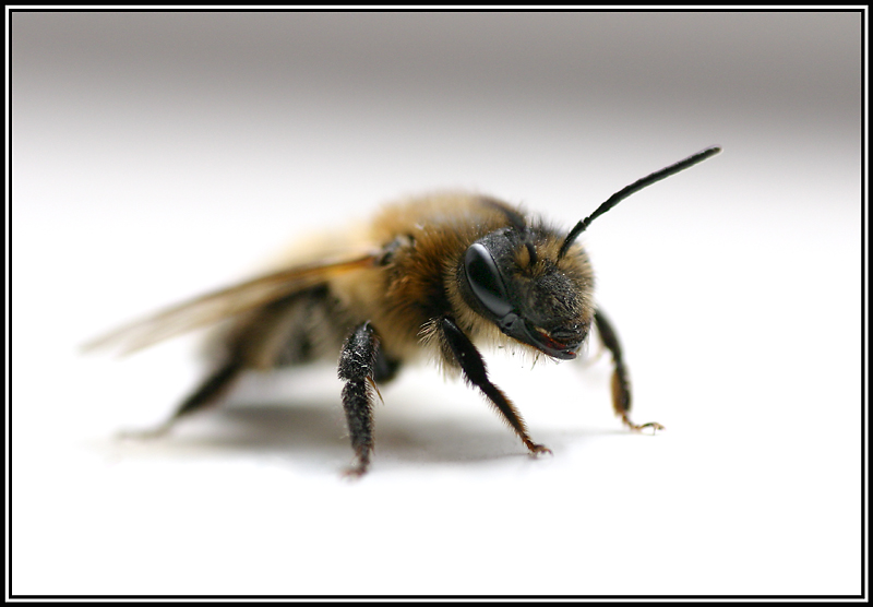 To Bee or Not........