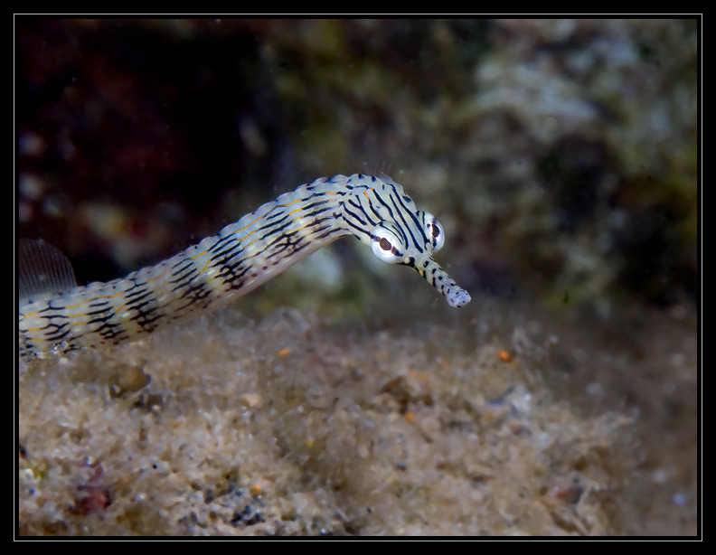 Pipefish up close and personal...