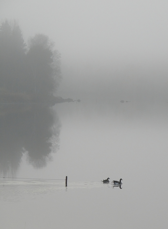 Into the Mist<br>by Perus