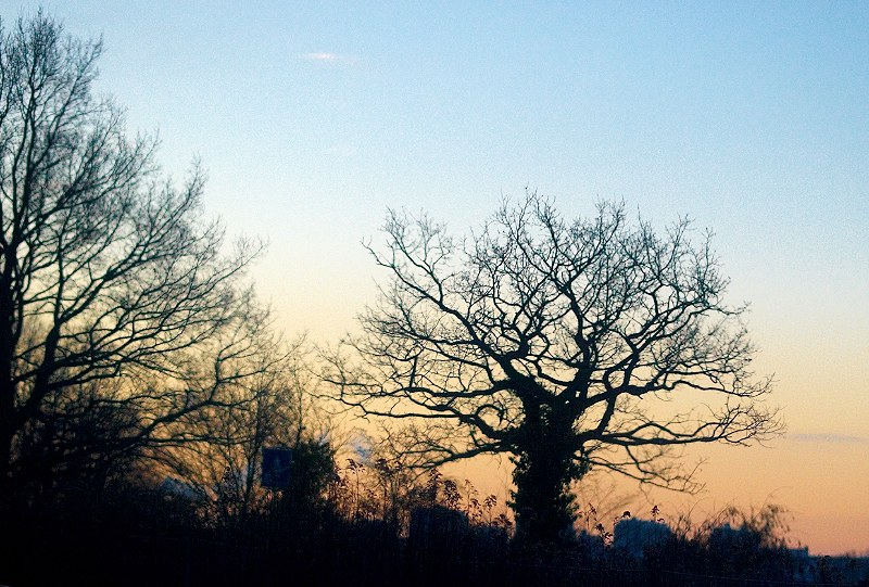 2010-01-25 Morning sky
