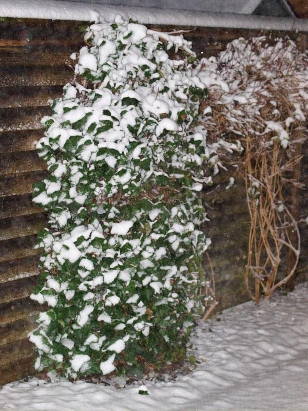 2010-11-23 A little snow