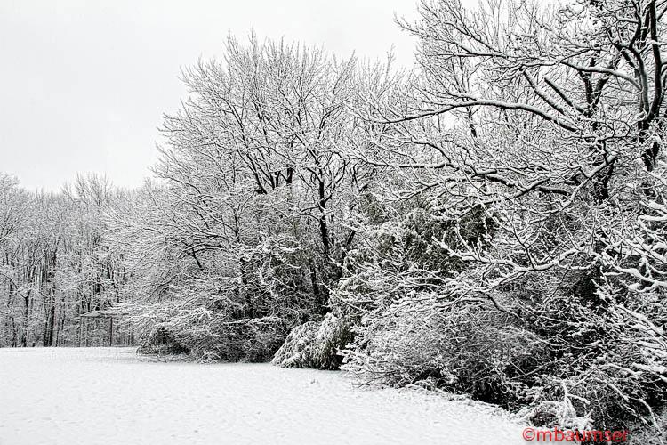 Polansky Park Edison NJ In The Snow 37304
