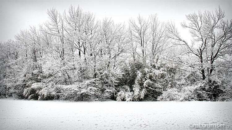 Polansky Park Edison NJ In The Snow 37309