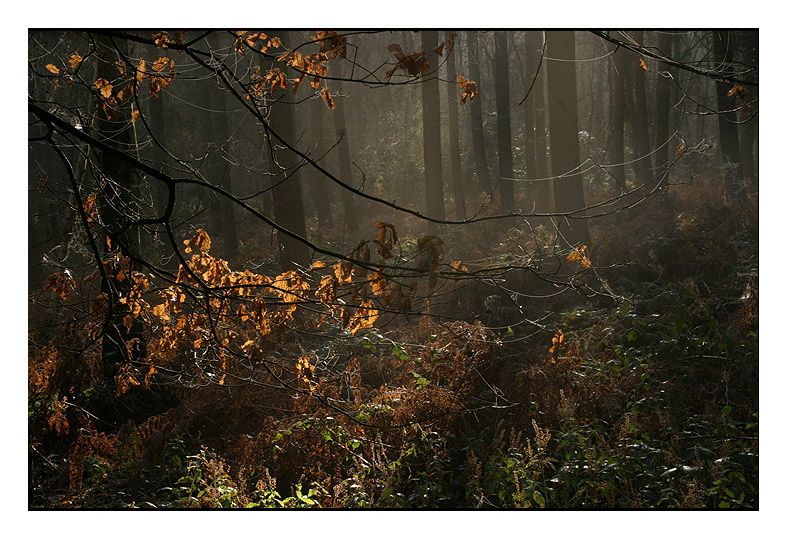 Charnwood - Outwoods