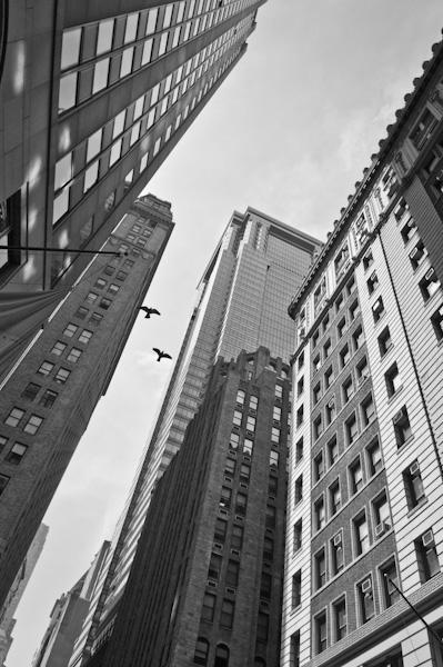 Wildlife on Wall Street