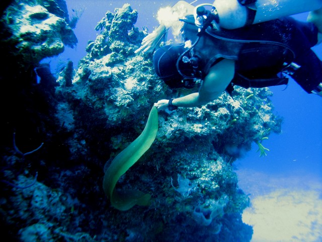 Divemaster Luis dancing with the moray