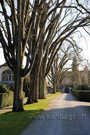 Bäume (92771)