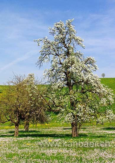 Frühling (64649)