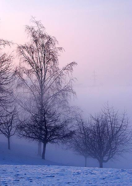 Baeume im Nebel (8686)