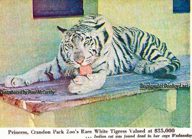 1970 - Princess, Crandon Park Zoos white tigress, dies unexpectedly