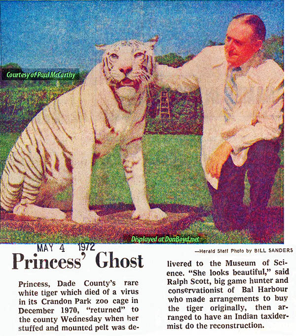 1972 - Ralph Scott returns Princess the white tiger, now stuffed, to the Crandon Park  Zoo