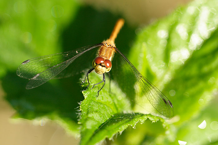 green leaf with dragonfly