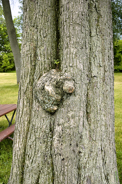 AN ALIEN FIST  WAS MAKING ITS WAY OUT OF THE TREE