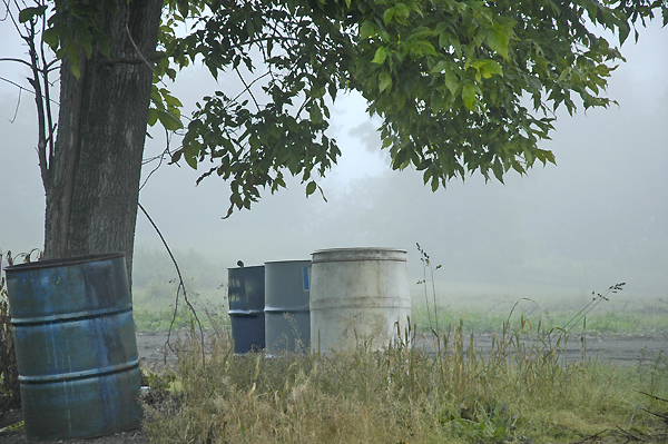 FOG AND CANS UNDER TREE