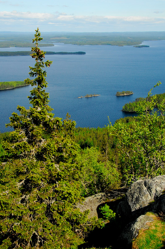 Koli and Lake Pielinen  in summer